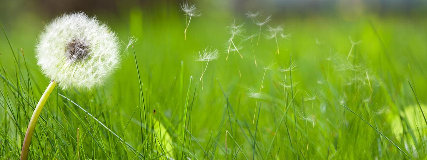 Lawn Weeds Header
